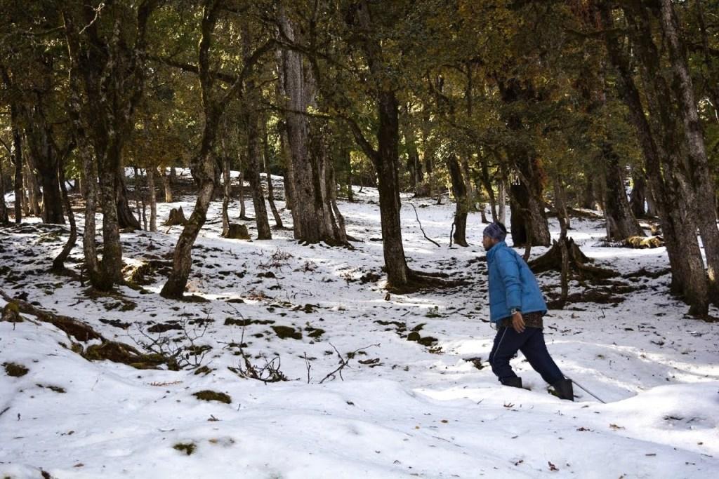 Gorson Bugyal trek in Auli, uttarakhand