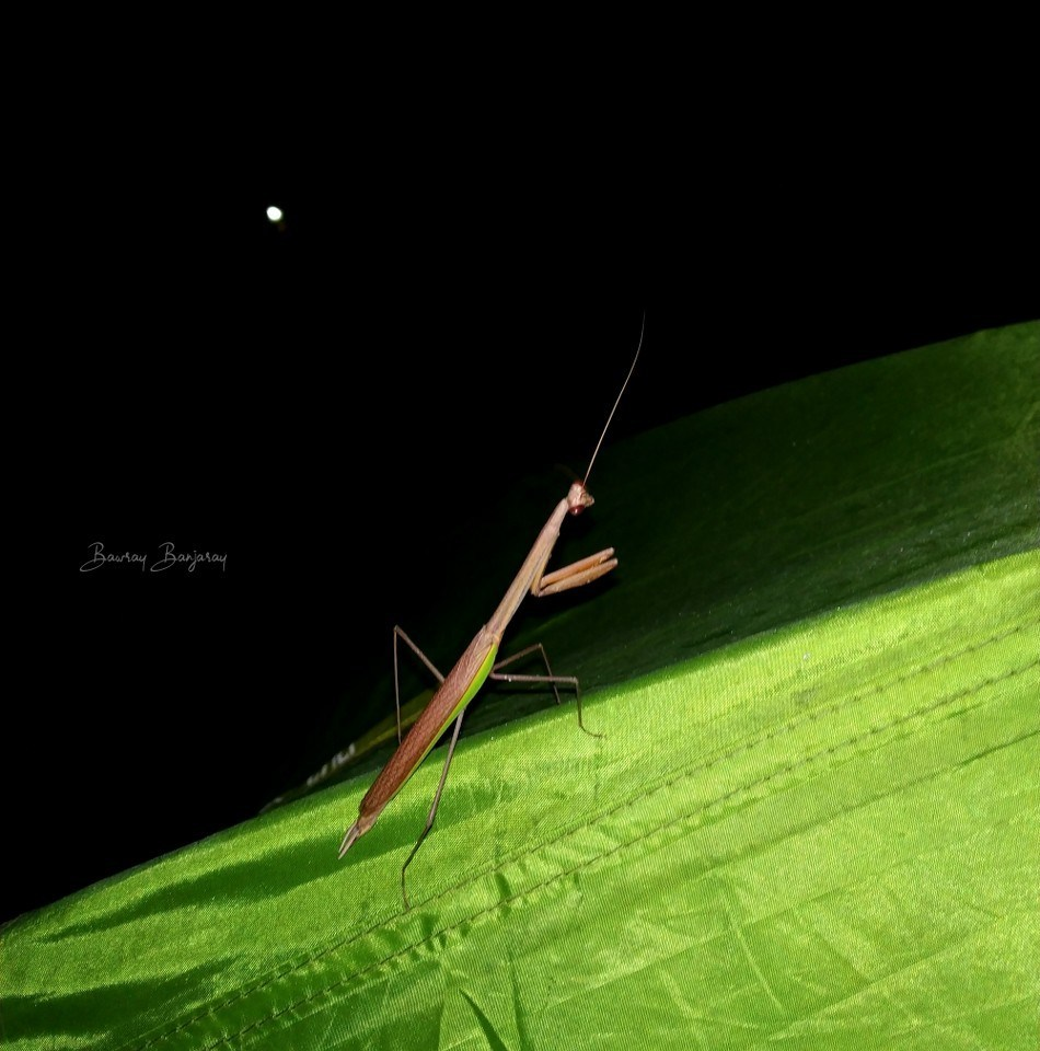 grasshopper in majuli