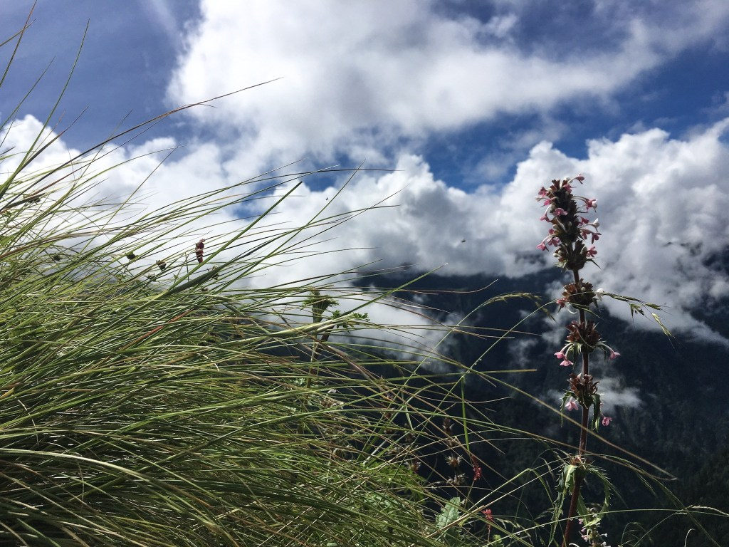 Greenery during Shrikhand Mahadev Trek