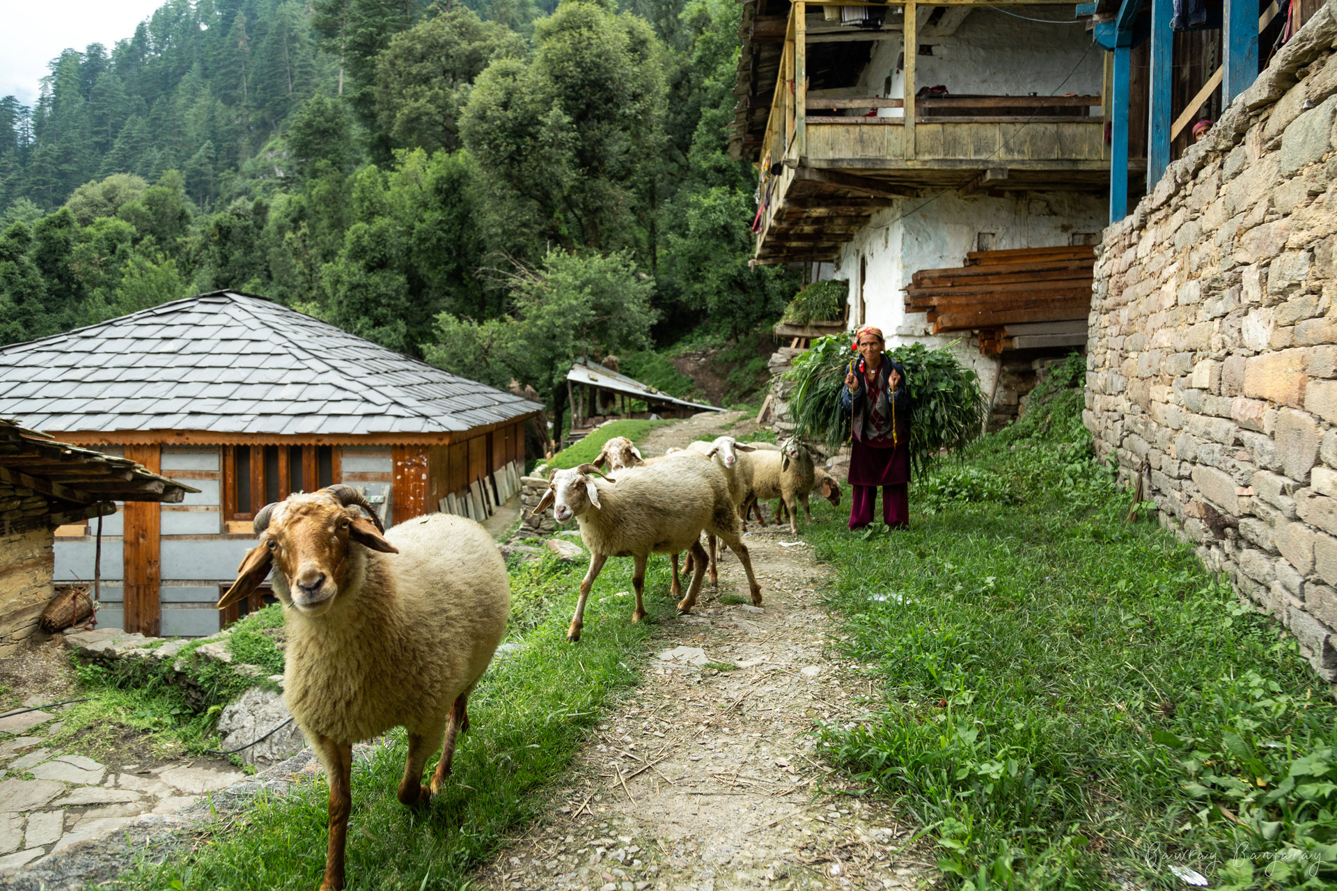 Life in Sainj Valley
