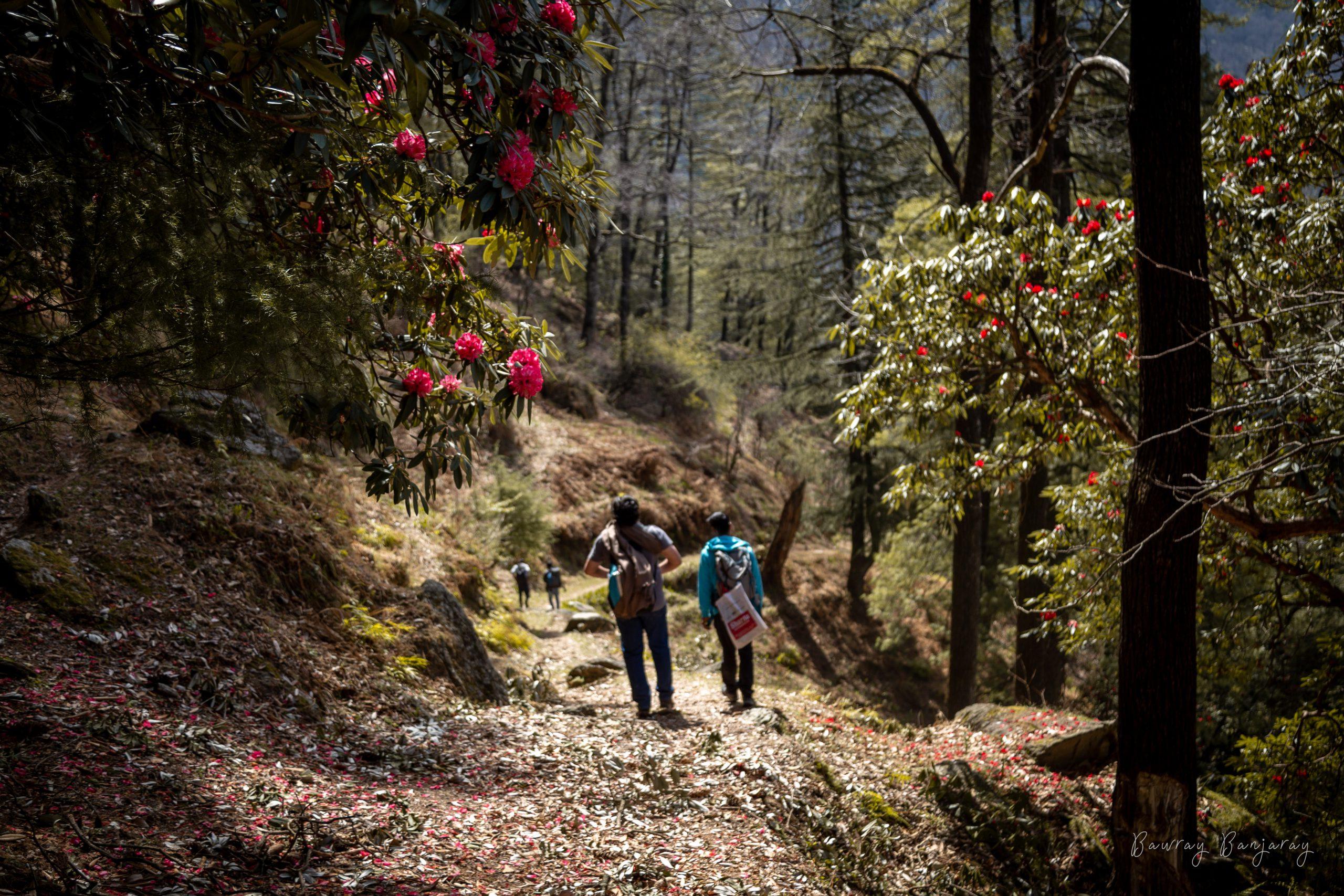 Trek from Upper Neahi to Shangadh
