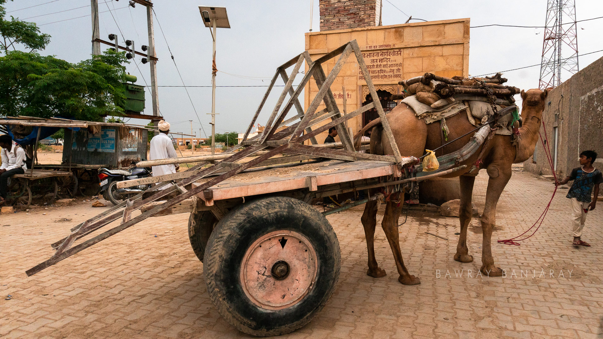 Camel cart in desert