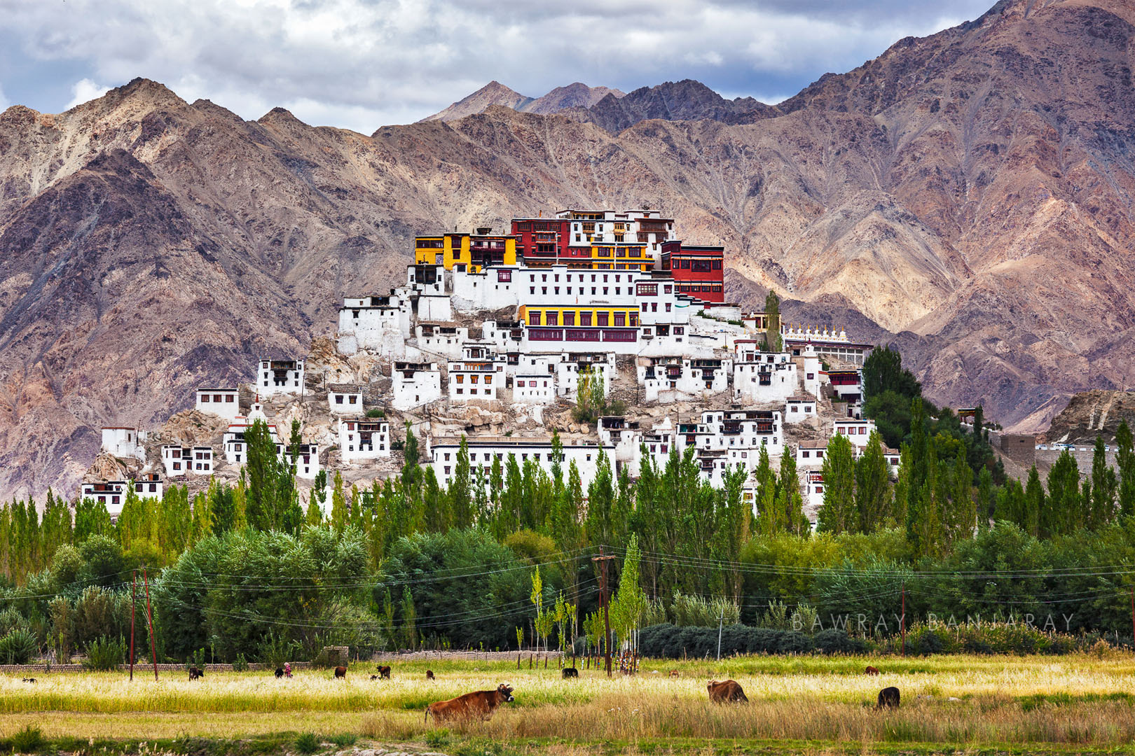 Thiksey Monastery is one of the largest monasteries in Lsadakh