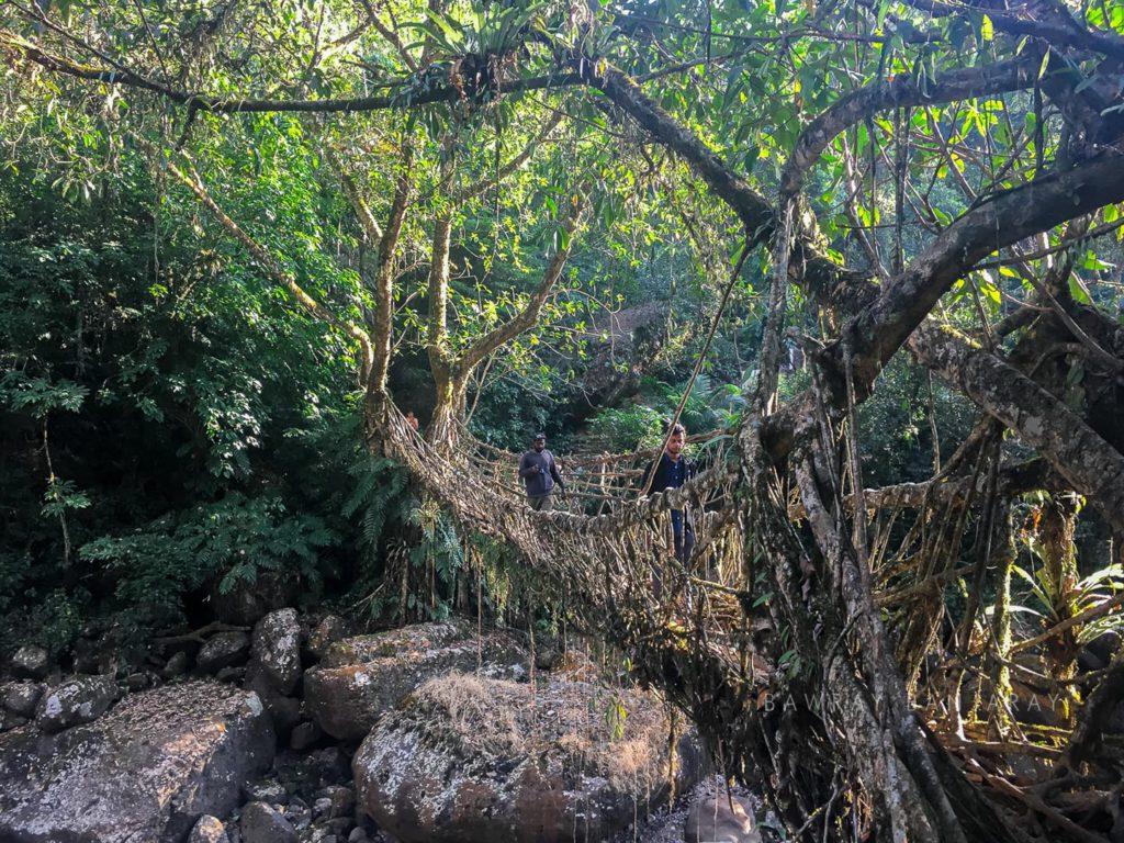 The root bridge of Meghalaya