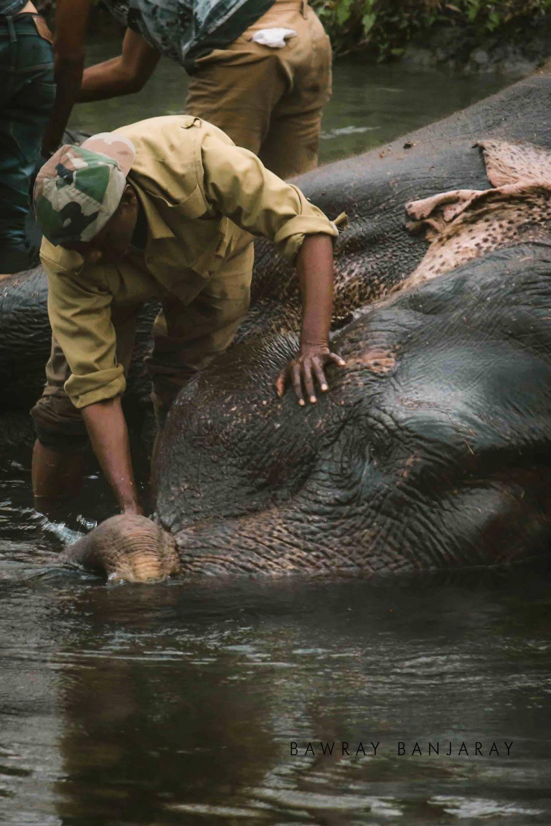 Elephant Safari Manas National Park