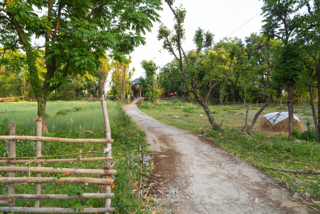 evening walk in paddar village of dharamshala